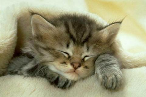 Anche il gatto di casa può graffiare, ecco i rischi