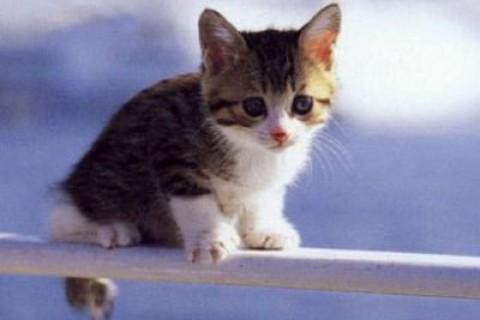 Pur essendo pacifici i gatti possono mordere: la disinfezione è d'obbligo