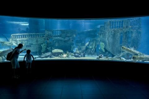 Idee per un week-end: i nostri  acquari  marini
