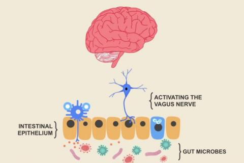 Microbiota, la nuova frontiera per studiare l'autismo