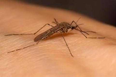 Virus Zika, quanto si rischia davvero?