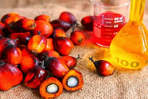 Olio di palma: non buono per corpo e ambiente ma ad EXPO dicono sì