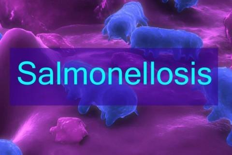 Salmonella, batterio responsabile della gastroenterite
