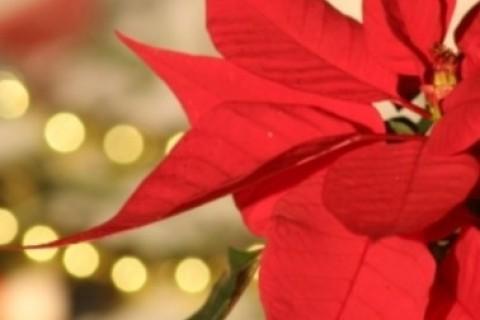 Sicurezza in casa: luminarie, albero e piante