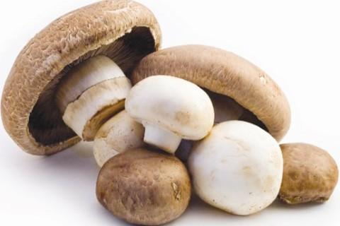 Funghi selvaggi, attenzione, soprattutto ai bambini