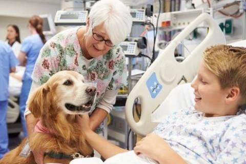 Animali da compagnia in ospedale, ora è possibile