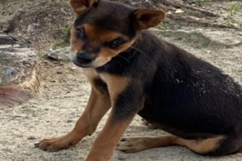 Coronavirus: gli animali domestici non sono portatori