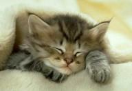 Allergie agli animali domestici in aumento, i più allergenici sono i gatti