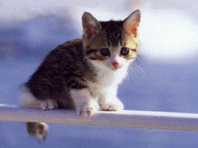 pur essendo pacifici i gatti possono mordere la disinfezione obbligo. Black Bedroom Furniture Sets. Home Design Ideas