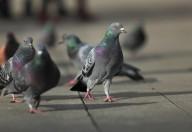 Un caso di aviaria a Hong Kong ma non lasciamoci prendere dalla paura