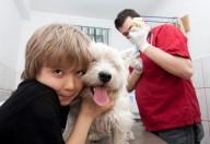 Leishmaniosi canina, il vaccino è disponibile per proteggere il nostro amico Fido
