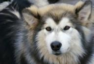 Oltre la metà delle aggressioni messe in atto dai cani sono rivolte  ai bambini