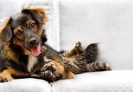 Cibo per cani e gatti: attenzione alle zoonosi se il bimbo tocca la ciotola