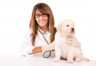Cani e gatti possono contrarre il diabete