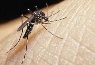 Tutte le novità sull'infezione da virus Zika