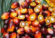 Olio di palma? Sì, purché utilizzato con moderazione