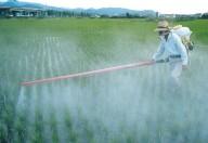 Glifosato, sostanza chimica presente nei cibi