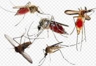 Punture di insetti, come difendersi