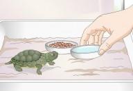Tartarughe d'acqua, incubatori di salmonellosi