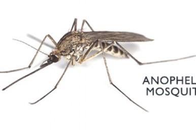 Malaria, con le zanzare non si scherza