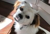 La pappa per il cane come prepararla