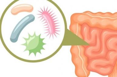 Il microbioma o GUT intestinale è il regista dell'obesità