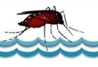 Zanzare: il caldo secco le rende più aggressive
