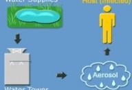 Legionella: anziani e bambini sono più vulnerabili