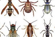 Estate ed insetti, le punture possono arrivare