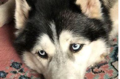 Cani e gatti, anche loro soffrono l'isolamento famigliare