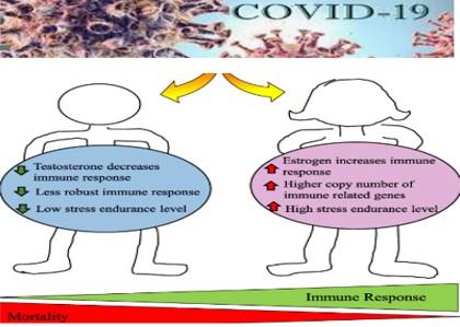 covid e testosterone