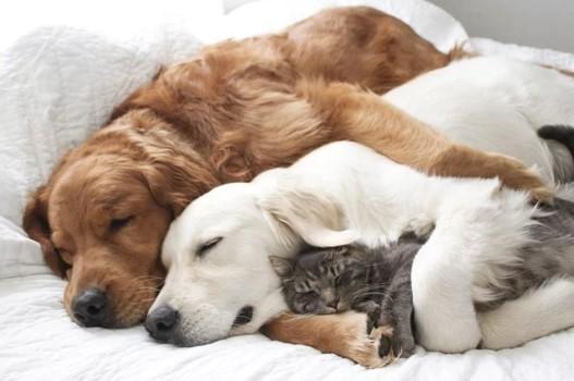 farmaci umani agli animali