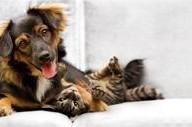 Card sanitaria per cani e gatti